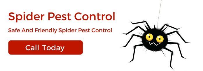 spider pest control Adelaide