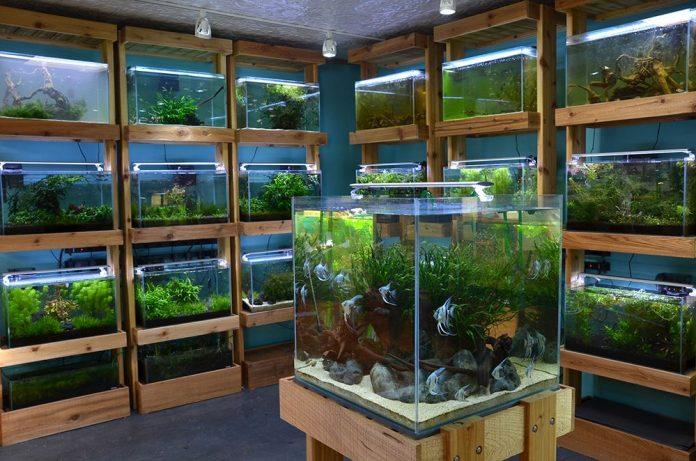 Aquarium Online
